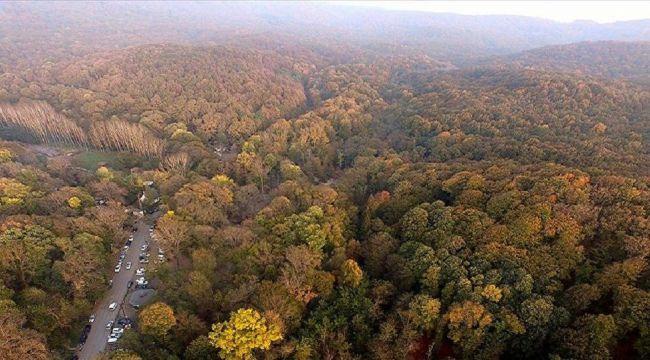 İstanbul ve bazı illerde orman yasağı! 1 ay sürecek
